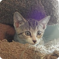 Adopt A Pet :: Monty - Gainesville, FL