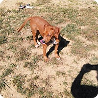 Labrador Retriever Mix Dog for adoption in Madionsville, Kentucky - Elsa