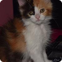 Adopt A Pet :: Zoey - Sherman Oaks, CA
