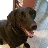 Adopt A Pet :: Dixie - Bellingham, WA