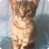 Adopt A Pet :: TONY - pasadena, CA