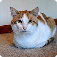 Adopt A Pet :: Sam - Manitowoc, WI