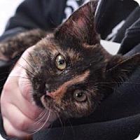 Adopt A Pet :: Veronica - E. Brookfield, MA