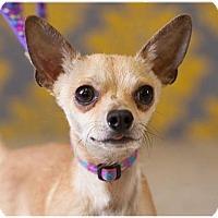 Adopt A Pet :: Jax - Fort Wayne, IN