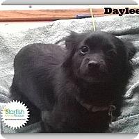 Adopt A Pet :: Daylee - Plainfield, IL