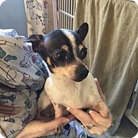Adopt A Pet :: Goldie - Cedaredge, CO