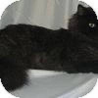 Adopt A Pet :: Darla - Powell, OH