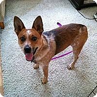 Adopt A Pet :: Reba - Phoenix, AZ