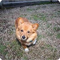 Adopt A Pet :: Ty - Inola, OK