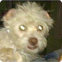 Adopt A Pet :: Vaughn - Phoenix, AZ