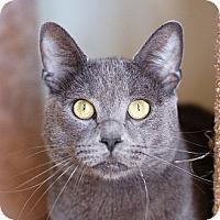 Adopt A Pet :: Fluffy - El Cajon, CA
