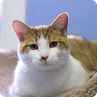 Adopt A Pet :: Studly Spud - Chicago, IL
