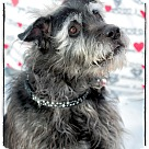 Adopt A Pet :: Max