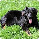 Adopt A Pet :: KELLAN