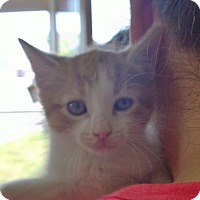 Adopt A Pet :: Chewy - Island Park, NY