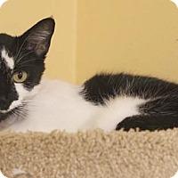 Adopt A Pet :: Scamp - Boca Raton, FL