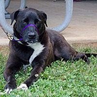 Adopt A Pet :: Sylvester - Midlothian, VA