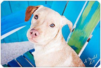 Terrier (Unknown Type, Medium) Mix Dog for adoption in Lake Charles, Louisiana - Benji