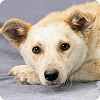 Adopt A Pet :: LIbby - Modesto, CA