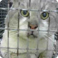 Adopt A Pet :: URGENT on 1/31 at DEVORE - San Bernardino, CA