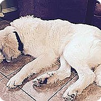 Adopt A Pet :: Belah - Kyle, TX