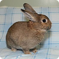 Adopt A Pet :: Nelson - Chesterfield, MO