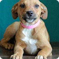 Adopt A Pet :: Sapphire - Waldorf, MD