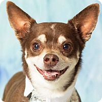Adopt A Pet :: Snippet - Gilbert, AZ