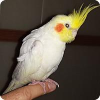 Adopt A Pet :: Lucky - Tampa, FL