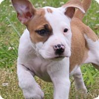 Adopt A Pet :: Addie - Glastonbury, CT