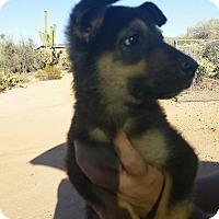 Adopt A Pet :: Ethan - Tucson, AZ