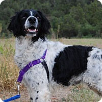 Adopt A Pet :: Chase - Ridgway, CO