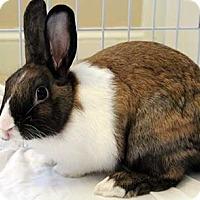 Dutch Mix for adoption in Tustin, California - Harry
