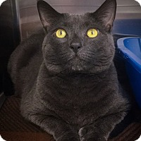 Adopt A Pet :: Mr. Kitten - Webster, MA
