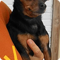 Adopt A Pet :: Pepper - Oskaloosa, IA