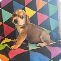 Adopt A Pet :: m1 - Pompton Lakes, NJ