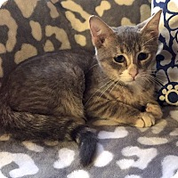 Adopt A Pet :: Bangle - Addison, IL