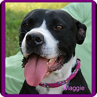 Adopt A Pet :: Maggie - Memphis, TN