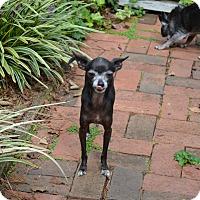 Adopt A Pet :: ~~BEBE - wilson, NC