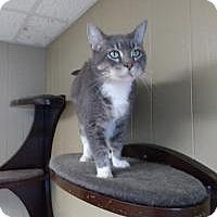 Adopt A Pet :: Ralph - Sauk Rapids, MN
