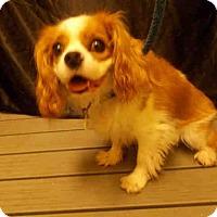 Adopt A Pet :: LUCKY - Upper Marlboro, MD