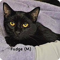 Adopt A Pet :: Fudge - West Orange, NJ