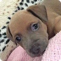Adopt A Pet :: Luther - Newport, KY