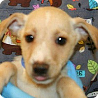 Adopt A Pet :: Clark - Wildomar, CA