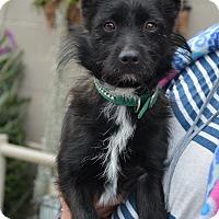 Adopt A Pet :: Rascal - Hopkinsville, KY