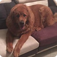 Adopt A Pet :: Ty - Sylacauga, AL