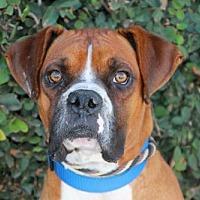 Adopt A Pet :: Elvis - Huntington Beach, CA