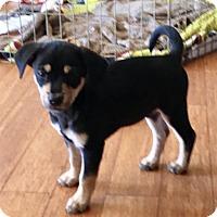 Adopt A Pet :: Dash - Von Ormy, TX