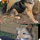 Adopt A Pet :: Bridget