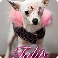 Adopt A Pet :: Tulip - Warner Robins, GA